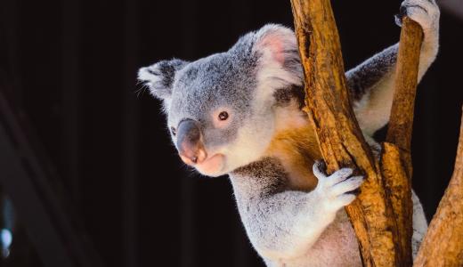 オーストラリアからのリモートワーク記事がまもなく連載予定!